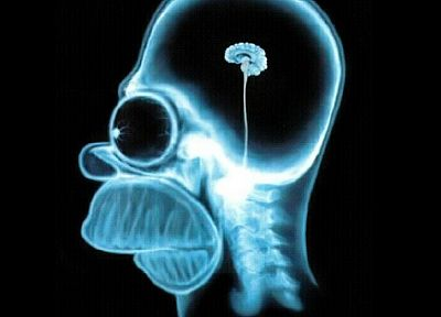 skulls, Homer Simpson, brain, The Simpsons, X-Ray - related desktop wallpaper