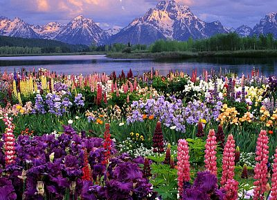 flowers, wildlife, grand, Wyoming - related desktop wallpaper