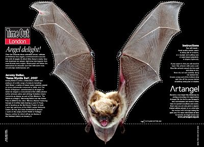 text, mammals, bats - random desktop wallpaper
