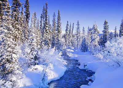 trees, forests, torrent, snow landscapes - random desktop wallpaper