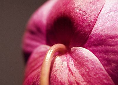 close-up, flowers, pink, macro, flower petals - desktop wallpaper