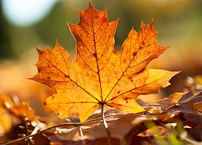 close-up, nature, leaf, autumn, leaves, plants, fallen leaves - related desktop wallpaper