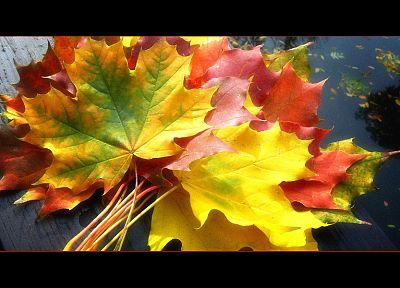 leaves, fallen leaves - desktop wallpaper