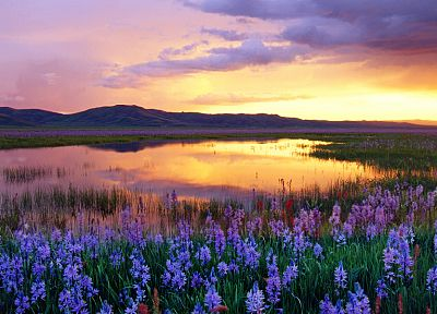 sunset, mountains, clouds, landscapes, flowers, meadows, swamp - desktop wallpaper