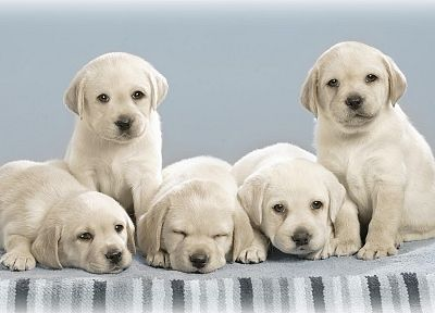 animals, dogs, puppies, pets - related desktop wallpaper