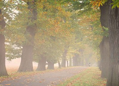 trees, autumn, Germany, mist, outdoors, Alley - random desktop wallpaper
