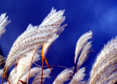 nature, spikelets - related desktop wallpaper