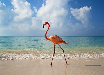 clouds, birds, flamingos, beaches - related desktop wallpaper