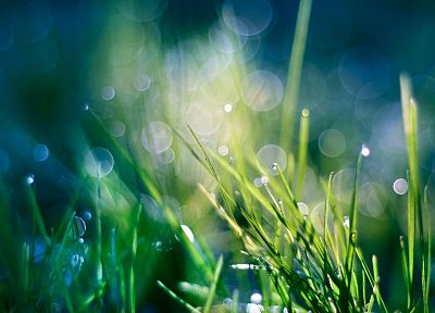 green, nature, grass, Heaven, bokeh, water drops, macro, dew - related desktop wallpaper