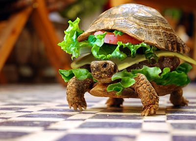 sandwiches, funny, turtles, hamburgers, photo manipulation - desktop wallpaper