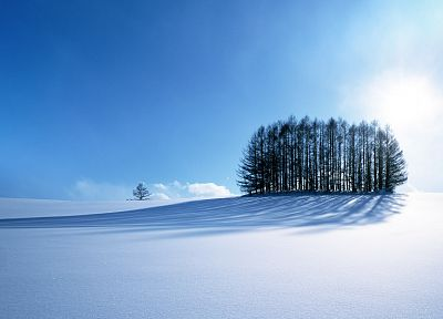 landscapes, snow, trees, snow landscapes - random desktop wallpaper