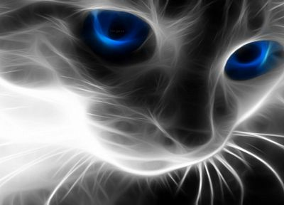 cats, Fractalius - random desktop wallpaper