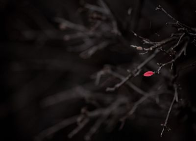 nature, macro, selective coloring, branches - random desktop wallpaper