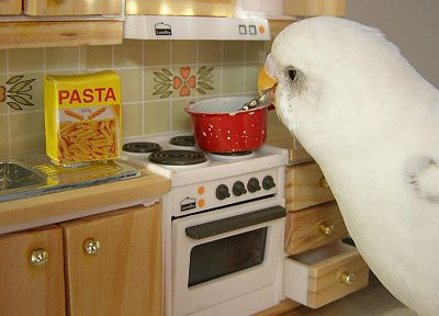 birds, Japanese, cooking, spaghetti - random desktop wallpaper