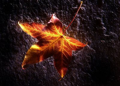 leaves, sunlight, fallen leaves - random desktop wallpaper