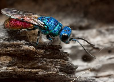 animals, insects, fly - desktop wallpaper