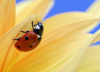 climbing, ladybirds - desktop wallpaper