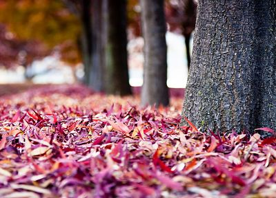 nature, trees, autumn, leaves, depth of field, fallen leaves - random desktop wallpaper