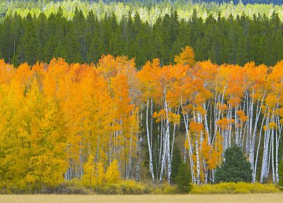 golden, Wyoming, Grand Teton National Park, National Park - desktop wallpaper