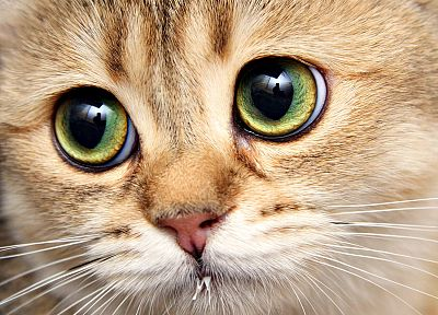 close-up, eyes, cats, animals - related desktop wallpaper