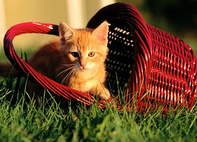 cats, animals, grass, kittens, baskets - random desktop wallpaper