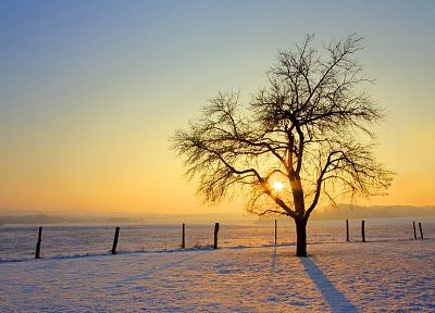 sunset, landscapes, nature, snow, trees - related desktop wallpaper