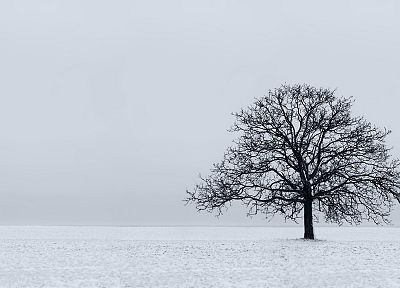 nature, snow, trees, white - desktop wallpaper