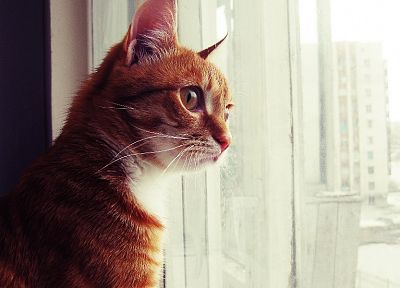 cats, animals, kittens, window panes - related desktop wallpaper