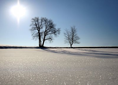 landscapes, winter, snow, Sun, trees, sunlight, blue skies - random desktop wallpaper