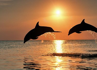 sunset, jumping, dolphins, Honduras - desktop wallpaper