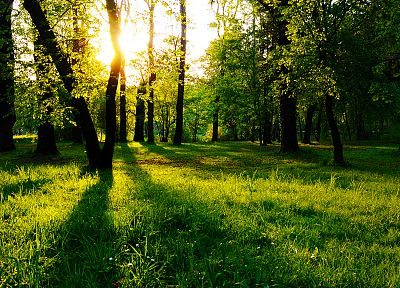 landscapes, nature, trees, grass, sunlight, parks - related desktop wallpaper