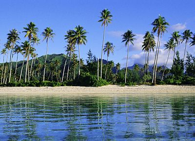 islands, French Polynesia, palm trees - related desktop wallpaper