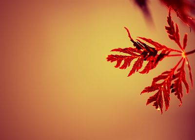 nature, red, leaves, macro - desktop wallpaper
