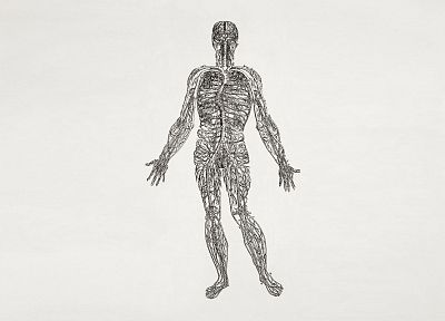 anatomy, human body, nerves - desktop wallpaper
