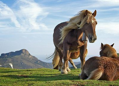 landscapes, nature, animals, horses - desktop wallpaper