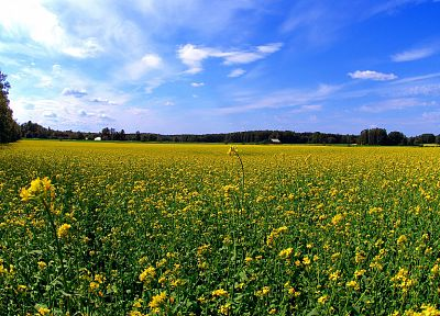 nature, flowers, fields, skyscapes - related desktop wallpaper