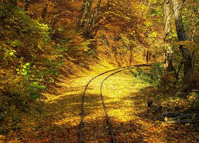 trees, autumn, leaves, railroad tracks - desktop wallpaper