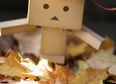 Danboard, fallen leaves - related desktop wallpaper