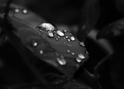 black and white, leaf, water drops - random desktop wallpaper