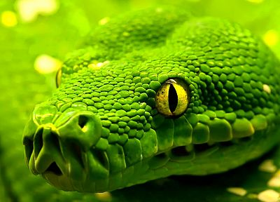 green, snakes - related desktop wallpaper