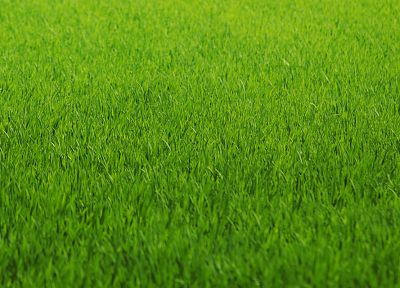 green, nature, grass, fields, lawn - random desktop wallpaper