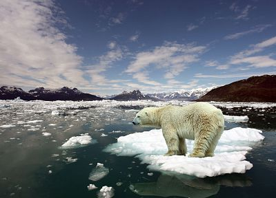 ice, animals, arctic, floating islands, polar bears - desktop wallpaper