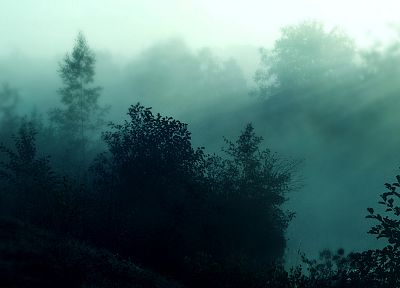 nature, forests, mist - desktop wallpaper