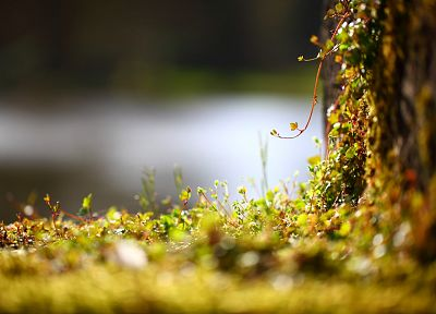 moss, macro - newest desktop wallpaper