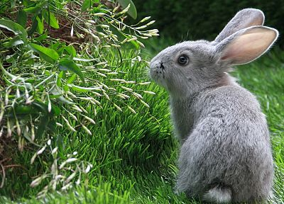 bunnies, animals, grass, rabbits - related desktop wallpaper