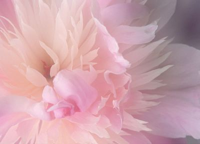 close-up, nature, flowers, flower petals - random desktop wallpaper