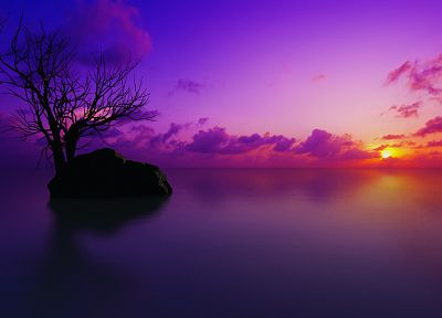 sunset, landscapes, nature, trees, multicolor, purple, reflections - desktop wallpaper