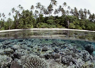 islands, palm trees, coral reef, Solomon Islands, split-view - related desktop wallpaper