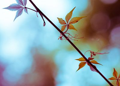 autumn, leaves, depth of field - related desktop wallpaper