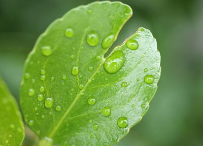 green, nature, leaves, plants, water drops - related desktop wallpaper